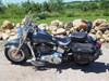 Photo of a 2015 Harley-Davidson® FLSTC Heritage Softail® Classic
