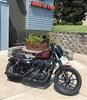 Photo of a 2019 Harley-Davidson® XL1200NS Iron 1200™